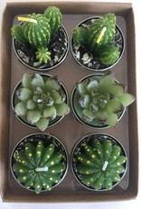 180 Degrees CACTUS TEALIGHT CANDLE SET