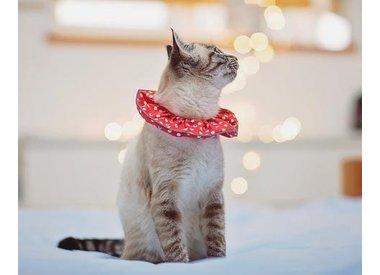 Cat Warning Collars