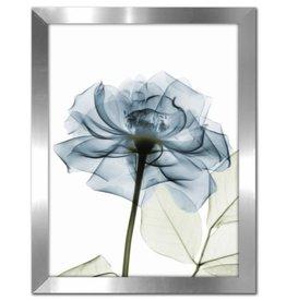 """Cadre Rose Bleue #1 SOFT TEAL ROSE 12"""" X 16"""""""