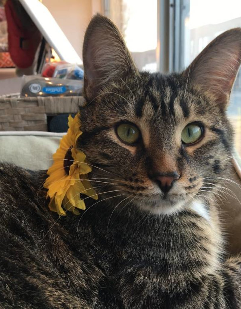 Pet Head Pet Head Sunflower