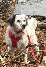 JAPPE Private Dog Walking