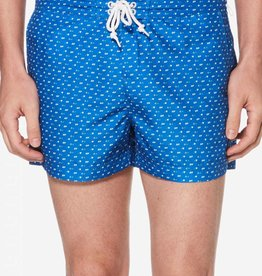 Penguin Penquin Blue Triangle Swim