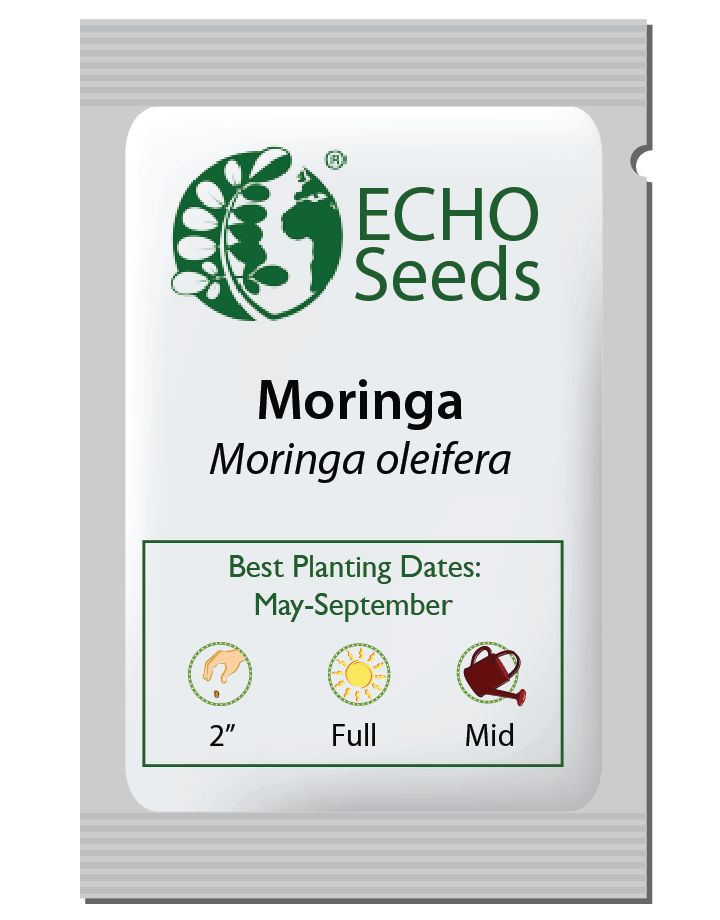 Moringa Seed Packet, Bulk