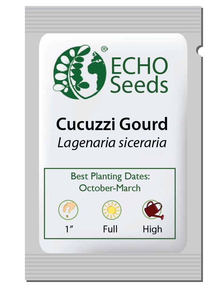 Gourd, Cucuzzi Italian Edible
