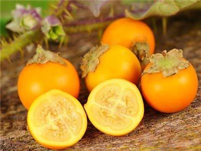 Baker Creek Seeds Garden Berry, Naranjilla