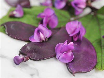 Baker Creek Seeds Hyacinth Bean, Moonshadow