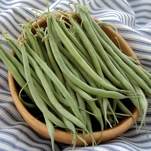 Seed Saver's Exchange Bean, Fin de Bagnol