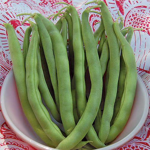 Seed Saver's Exchange Bean, Kentucky Wonder Bush