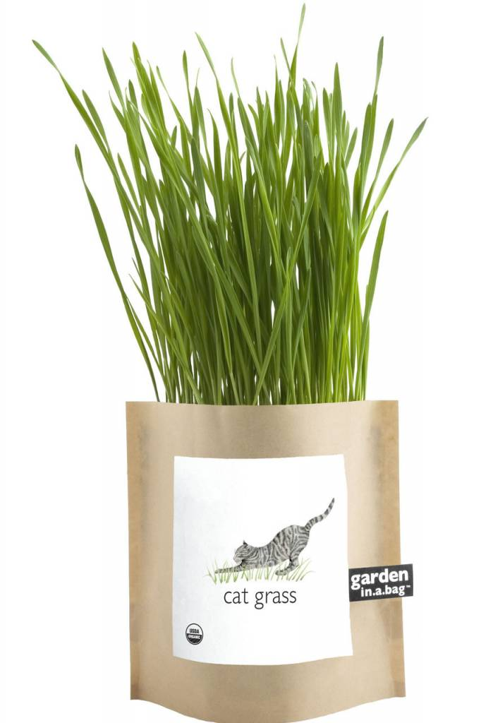 Garden in a Bag - Cat Grass