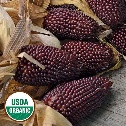 Seed Saver's Exchange Corn, Strawberry Popcorn
