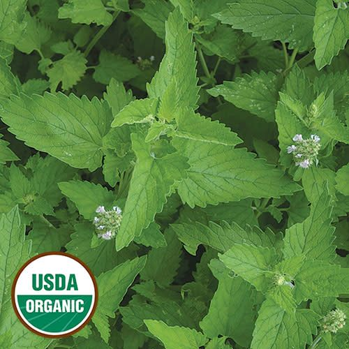 Seed Saver's Exchange Herb, Catnip