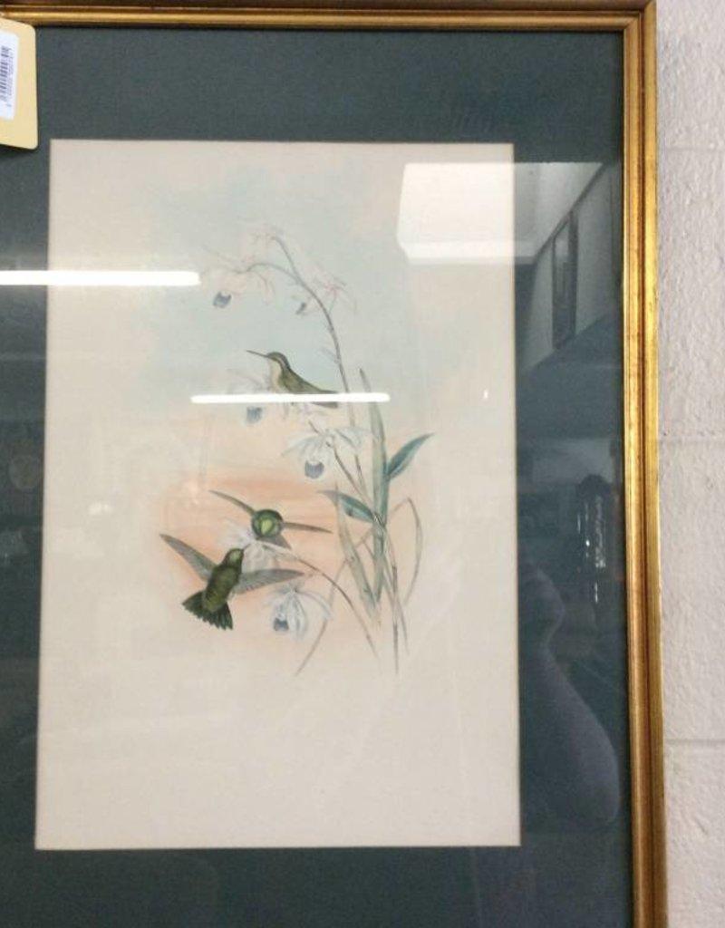 Picture hummingbirds