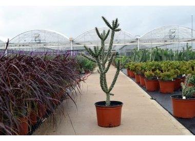 Succulents & Yucca