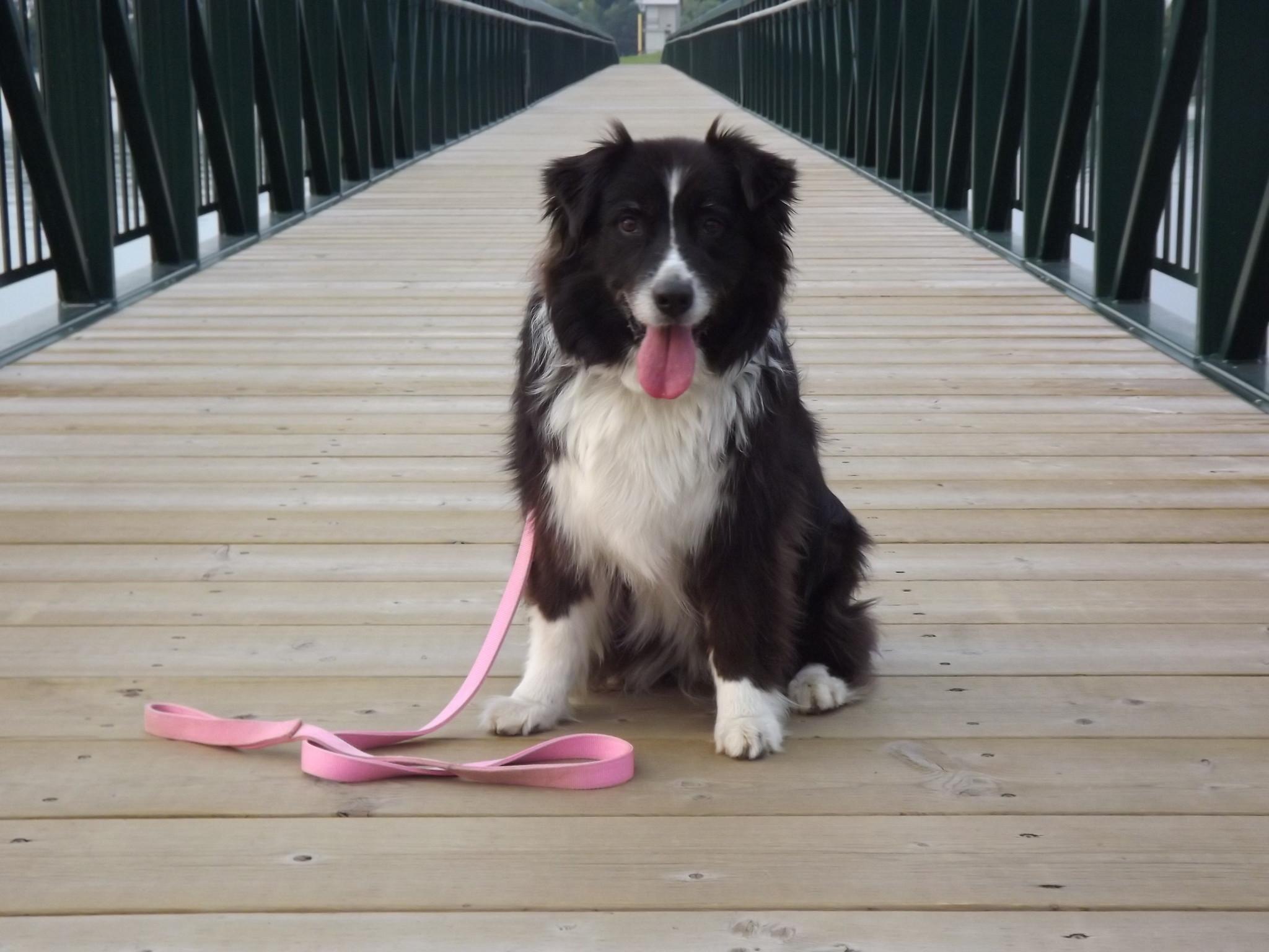 Maggy - Beamsville Ontario Pet Store