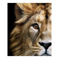 AFRICAN LION WALL DECOR