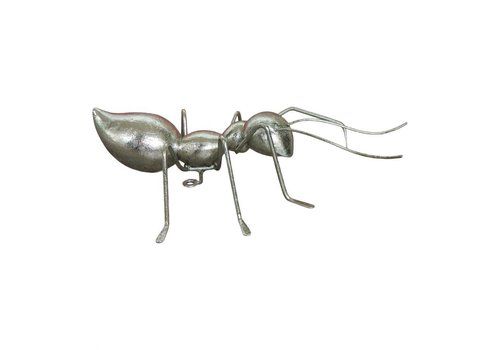 ANT SMALL