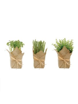 Burlap Wrapped Potted Plant