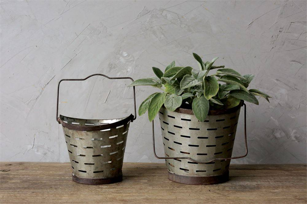 Αποτέλεσμα εικόνας για olive bucket