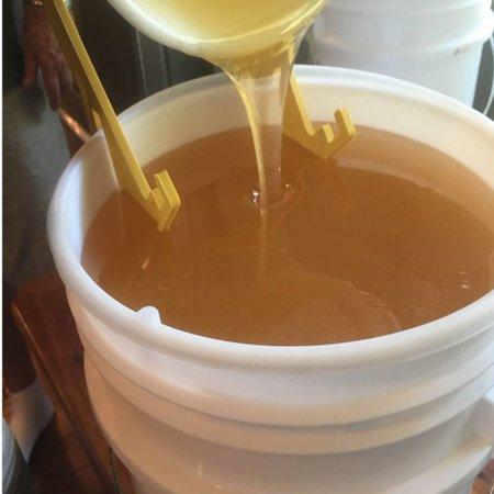 Extract Your Honey