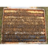 Single Hive with New Equipment FRIDAY Pick-Up