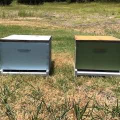 Texas Bee Supply Hive with Used Equipment Details and Description