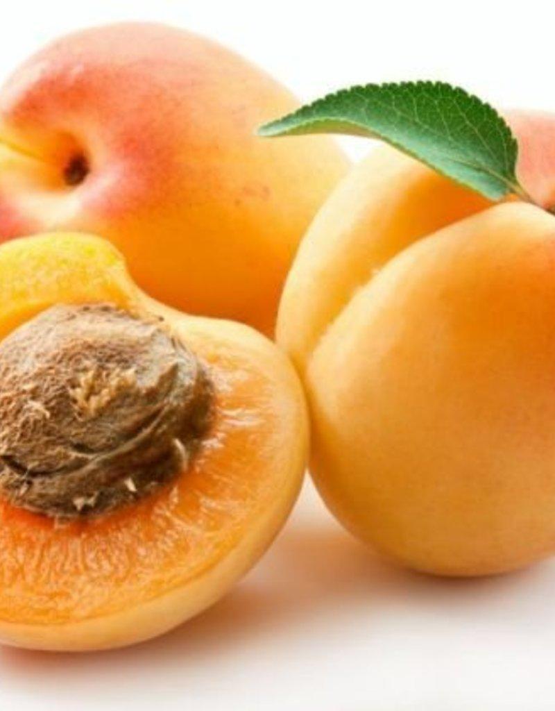 Apricot
