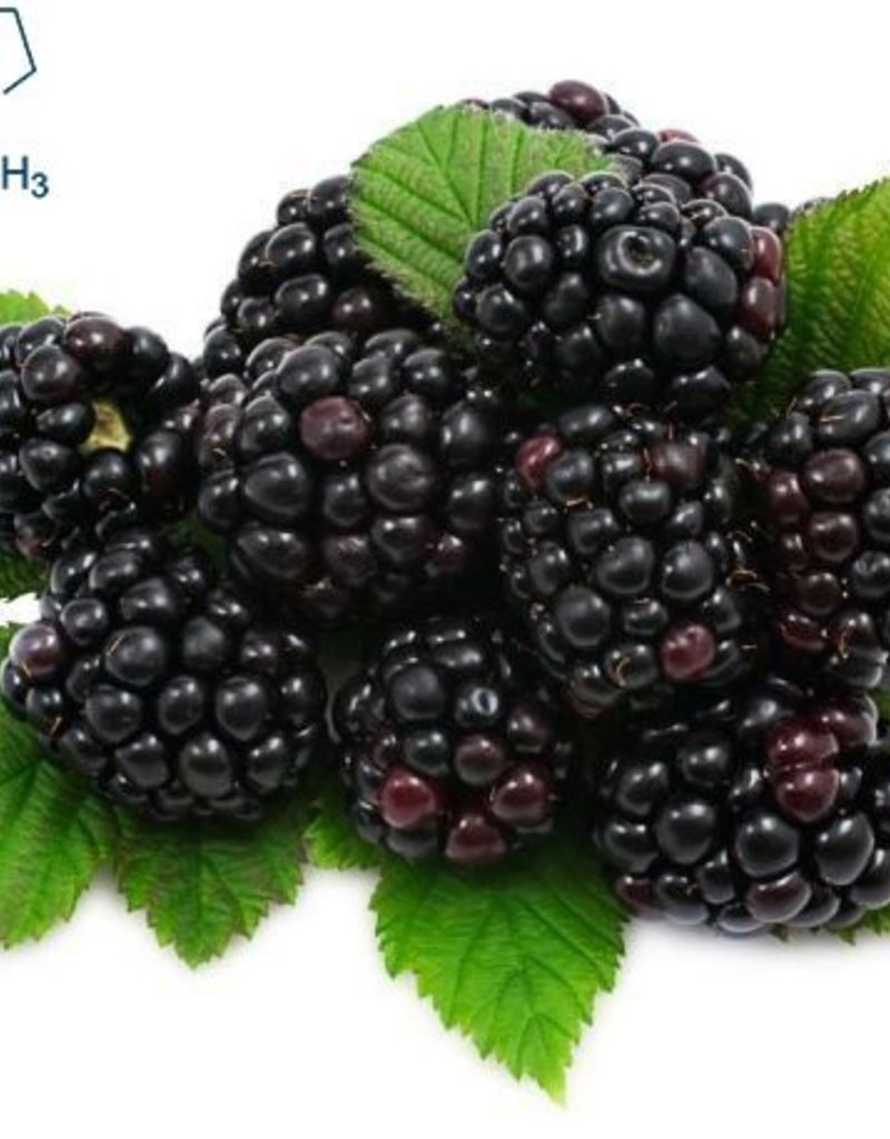 Blackberry | 30ml | Salt