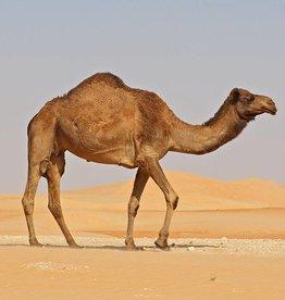 Desert Llama   30ml   Salt