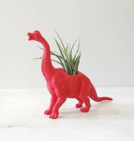 Dinature Dinosaure Plante - Petit - Brachiosaure rose foncé