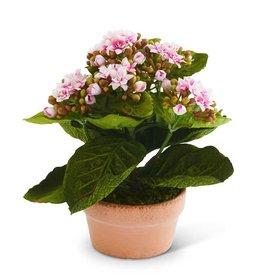 Bouvardia Flower in Clay Pot - Purple